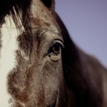 Equine Activity Immunity Act and what does it protect