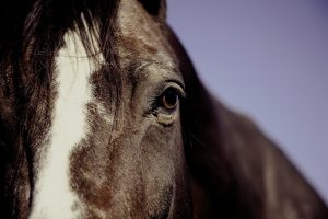 Equine Activity Immunity Act protects horses and more. Contact Sher & Associates from Berks County PA to learn more about the Equine Activity Immunity Act.